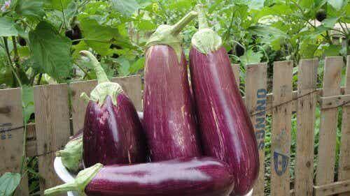 10 gezondheidsvoordelen van aubergine