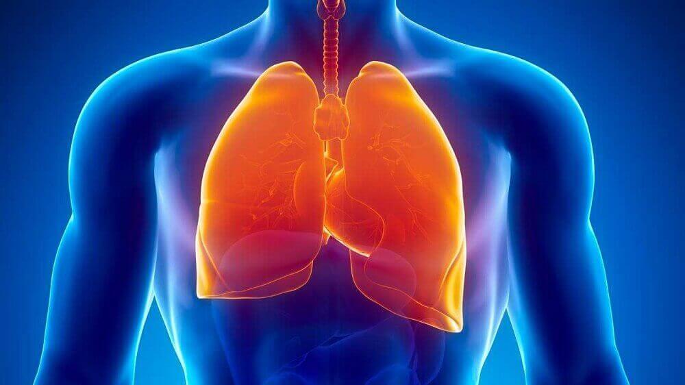 Afbeelding van longen want tuberculose is een van de medische oorzaken van nachtzweten