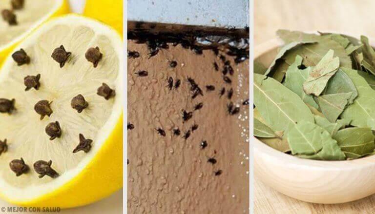 Op een natuurlijke manier een eind maken aan vervelende insecten