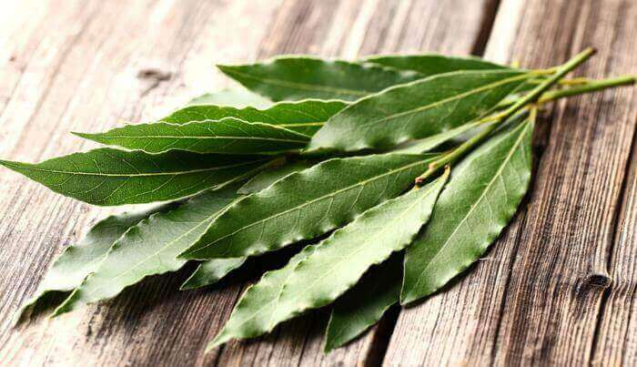 Een eind maken aan vervelende insecten met eucalyptus