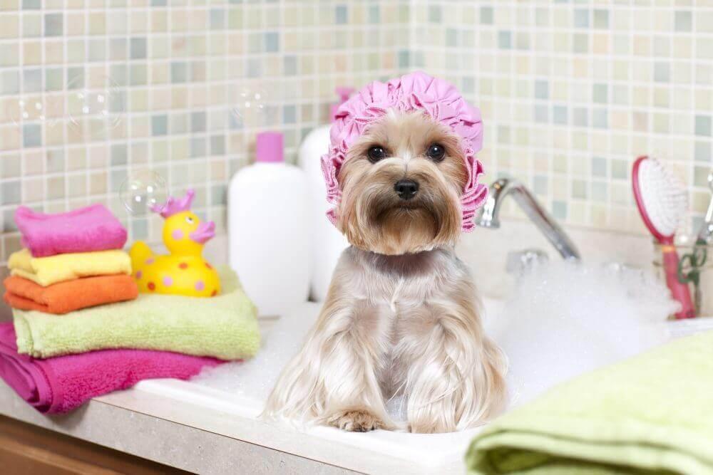 Een schoon huis met schone huisdieren