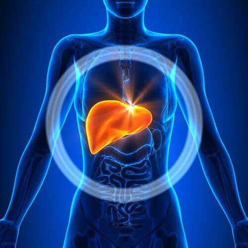 Een ontstoken lever