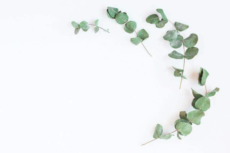 Versterk je longen en adem beter met eucalyptus