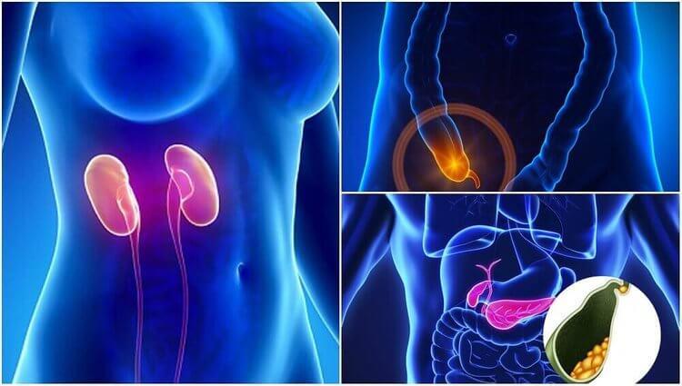Zeven organen die je niet nodig hebt om te overleven