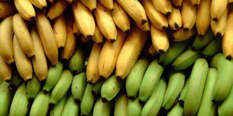 Wat is het verschil tussen bananen en bakbananen?