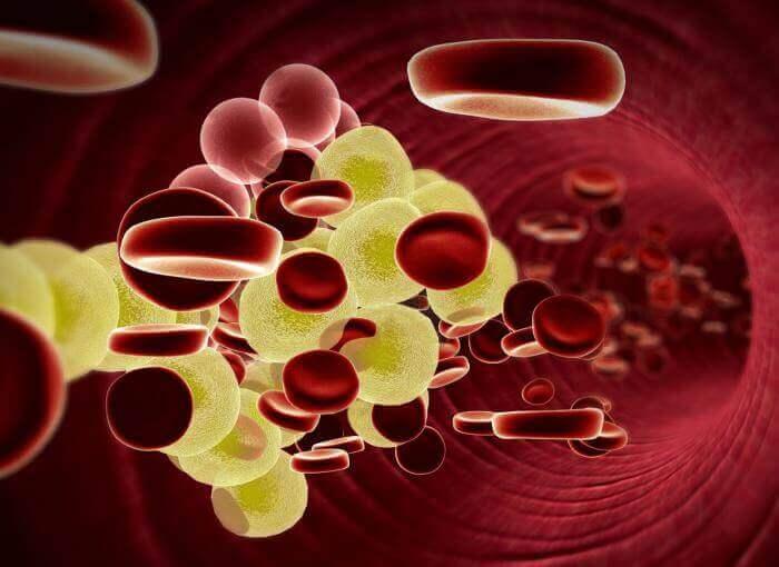 Een van de gezondheidsvoordelen van koriander is dat het slecht cholesterol tegengaat