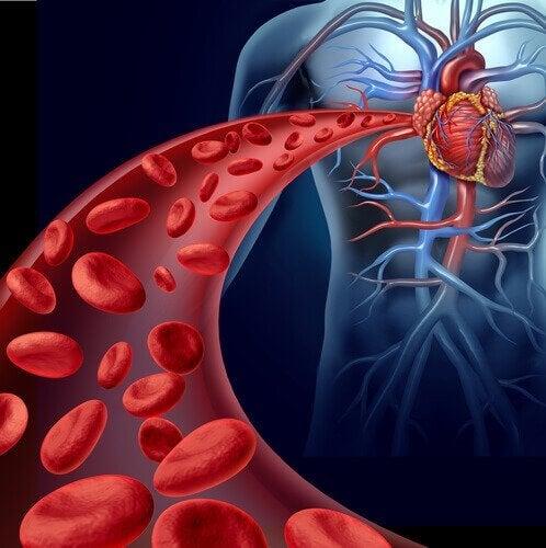 Gunstige eigenschappen van noten voor de bloedcirculatie