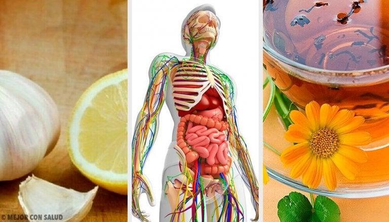Ontgiften van het lymfatisch systeem met 6 natuurlijke remedies