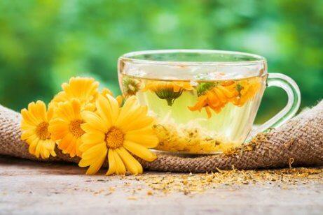 Opvliegers in de menopauze bestrijden met een aftreksel van goudsbloem