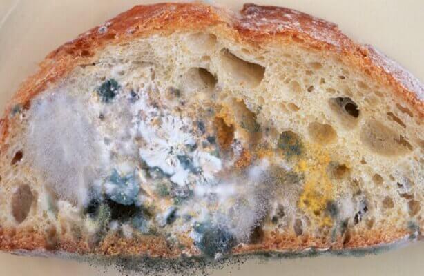 Beschimmeld brood
