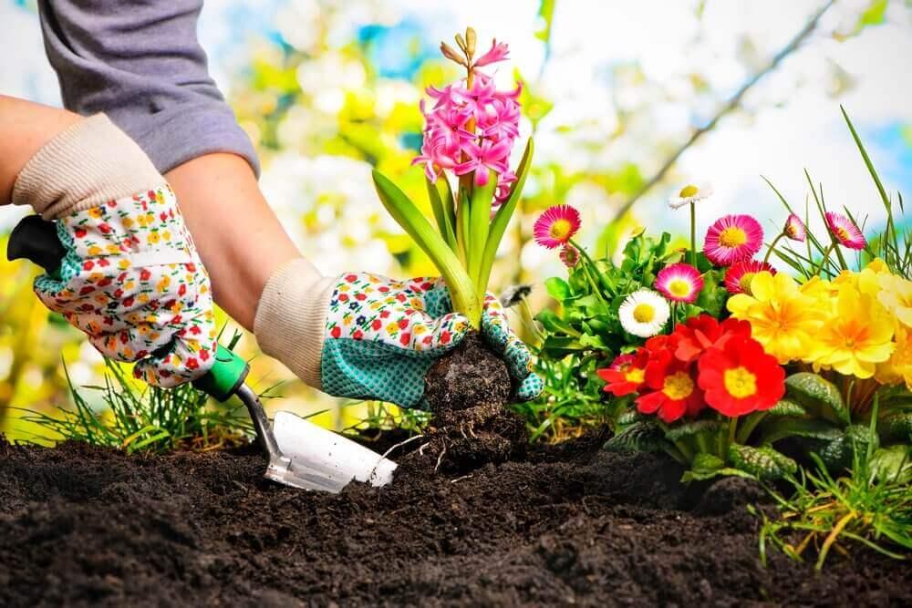 Planten in je tuin kweken