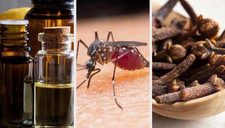 Tien geurtjes die helpen tegen muggen