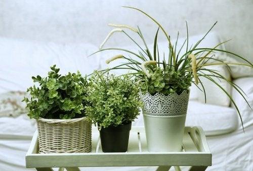 Vijf geurige planten die je gemakkelijk kan kweken