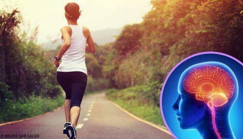 Stoppen met sporten verandert je hersenen