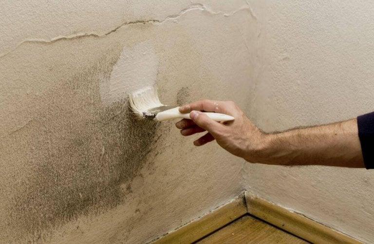 Maak op 5 manieren een eind aan de vochtigheid in je huis