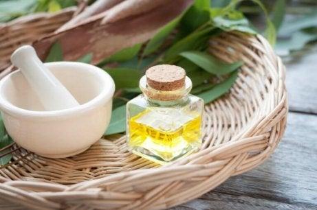 Voordelen van etherische oliën: eucalyptus