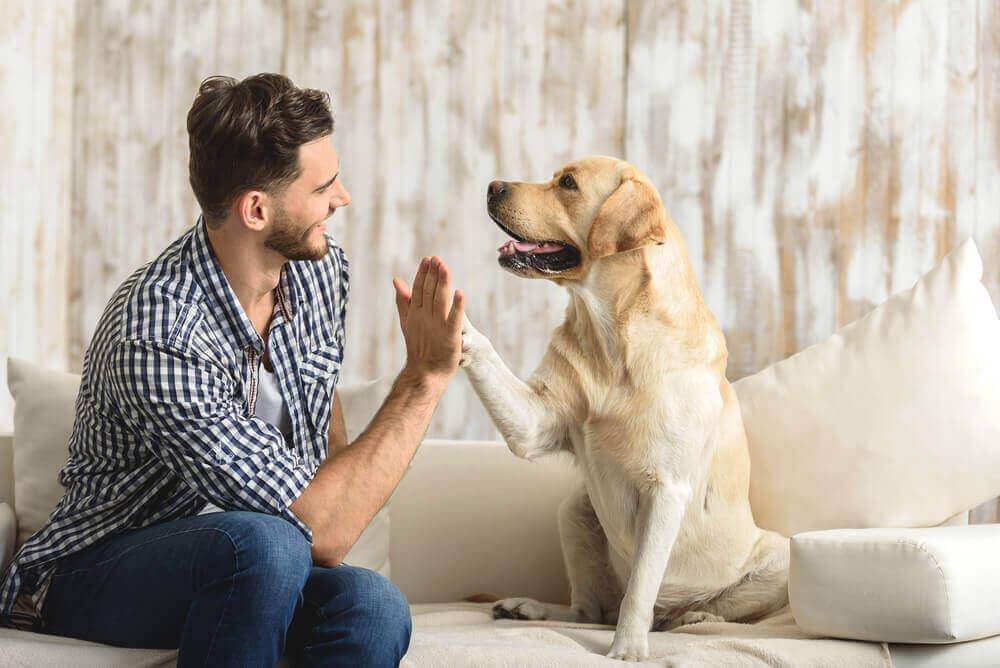 Voordelen van het hebben van een huisdier