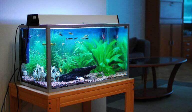 Aquarium schoonmaken