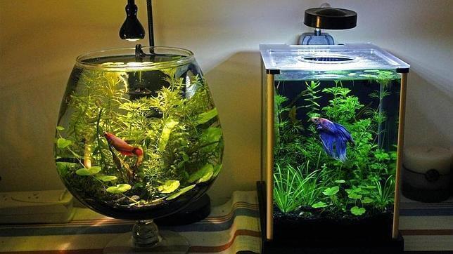 De beste manier om een aquarium schoon te maken