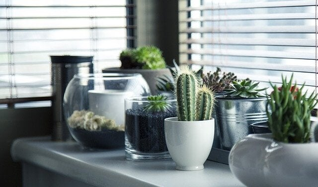 5 verschillende ideeën om cactussen te planten