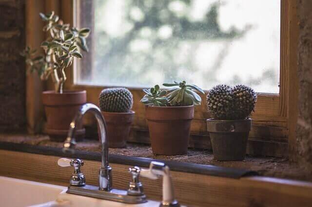Cactussen bij het raam
