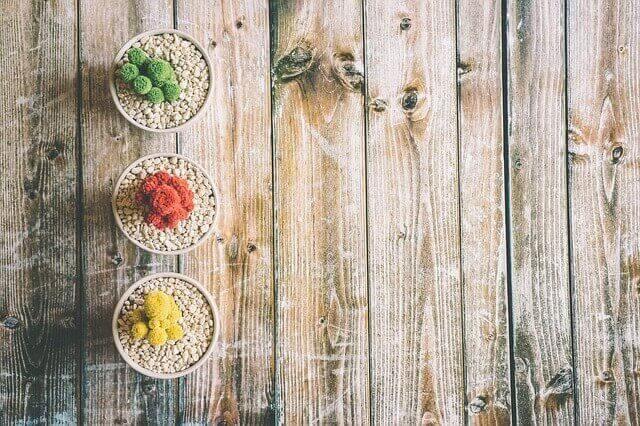 Rode, groene en gele cactussen