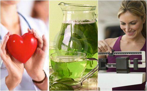 Dagelijks groene thee drinken biedt 6 belangrijke voordelen