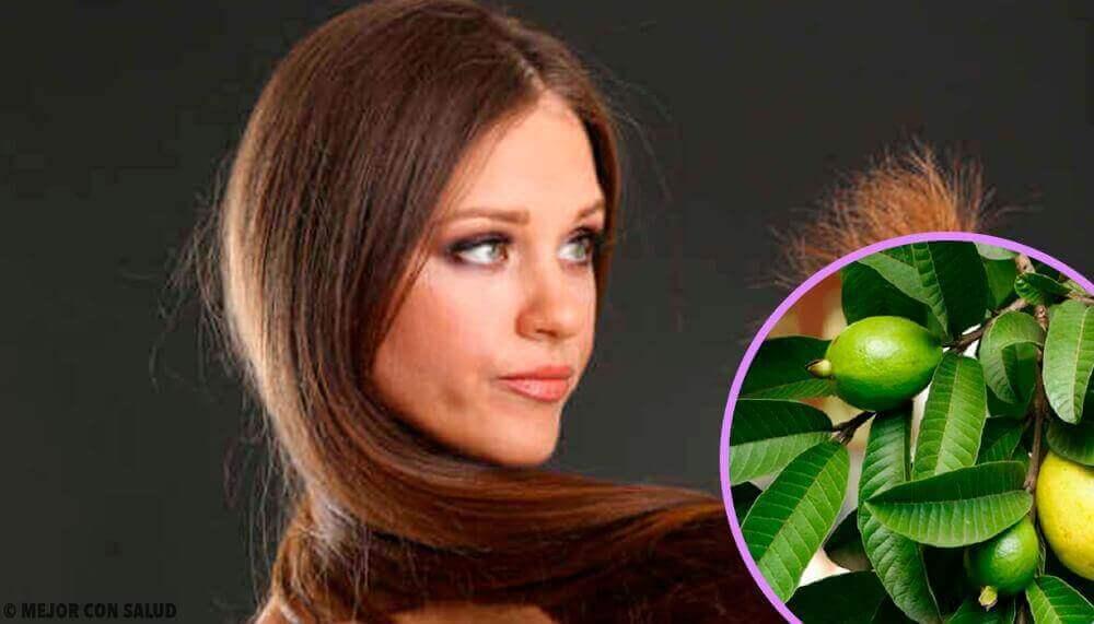 Gebruik guavebladeren voor beschadigd haar