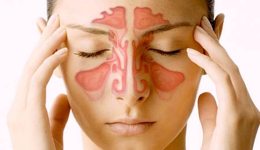 De neusbijholten: wat moet je erover weten