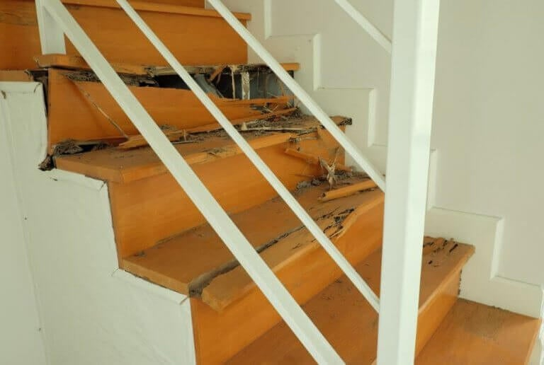 Van termieten afkomen: 4 effectieve methodes
