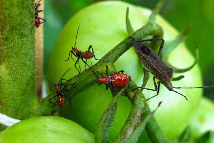 Vijf soorten natuurlijk vergif om van ongedierte af te komen