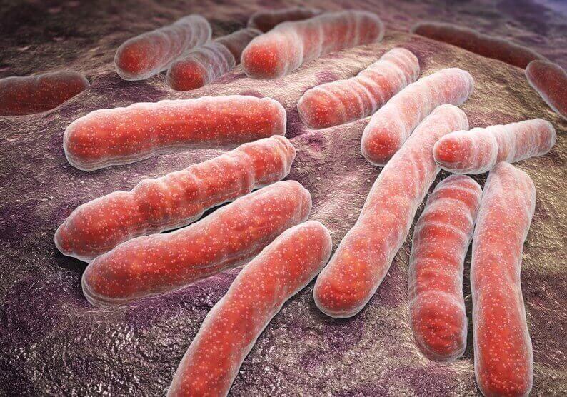 Uitvergroting van bacteriën