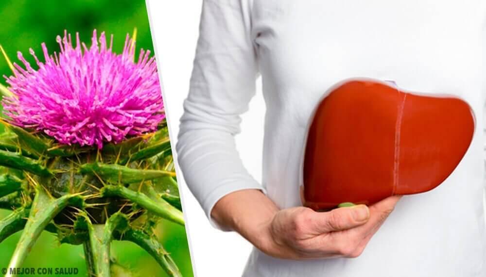 Mariadistel is een plant met ongelooflijke voordelen