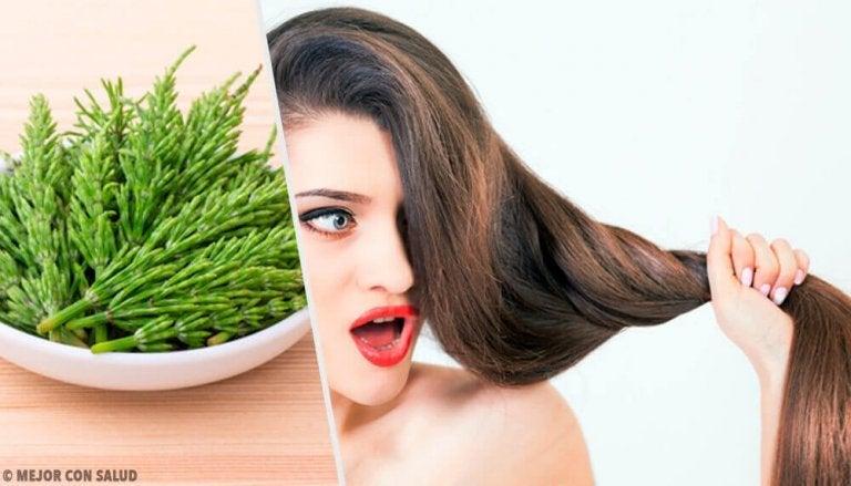 Hoe kan je de haargroei ondersteunen met heermoes?