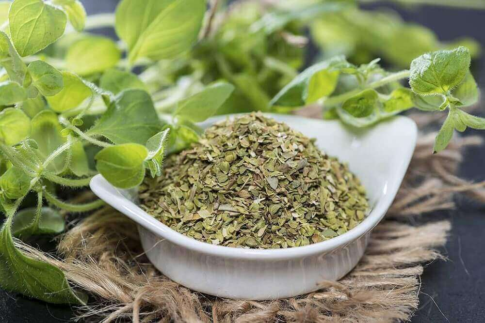 De symptomen van bronchitis: oregano
