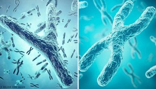 Chromosomale inactivering: een belangrijk proces in de geslachtsbepaling
