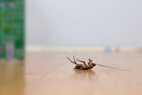 Kakkerlakken weren zonder pesticiden met deze 4 trucjes