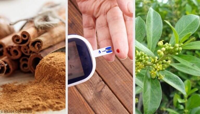 5 geneeskrachtige planten voor diabeten