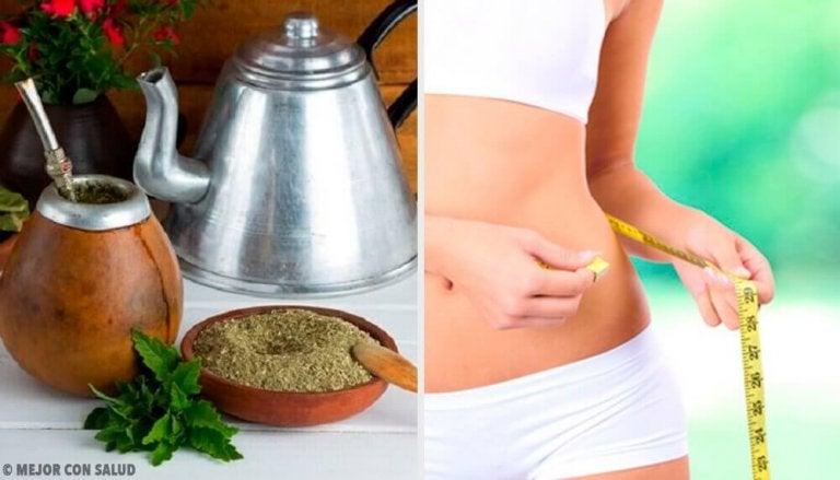 De voordelen van Yerba Mate: kan je er gewicht mee verliezen?