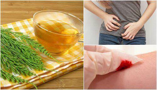 Remedies voor de gezondheid van paardenstaart