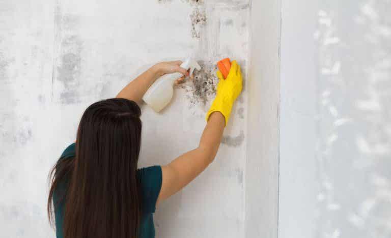Hoe kan je schimmel verwijderen uit je huis?