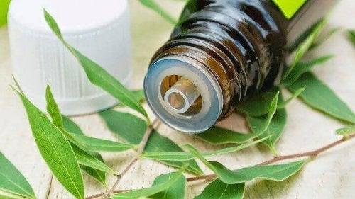 Tea tree olie is één van de natuurlijke remedies om schimmel te bestrijden
