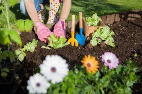 7 manieren om azijn in je tuin te gebruiken