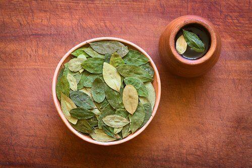 Cocablad-thee: de verrassende voordelen