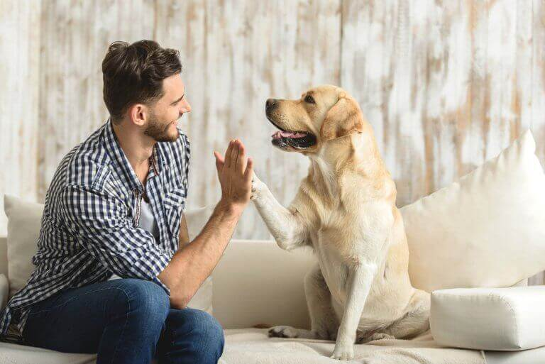 Hond geeft man een high five