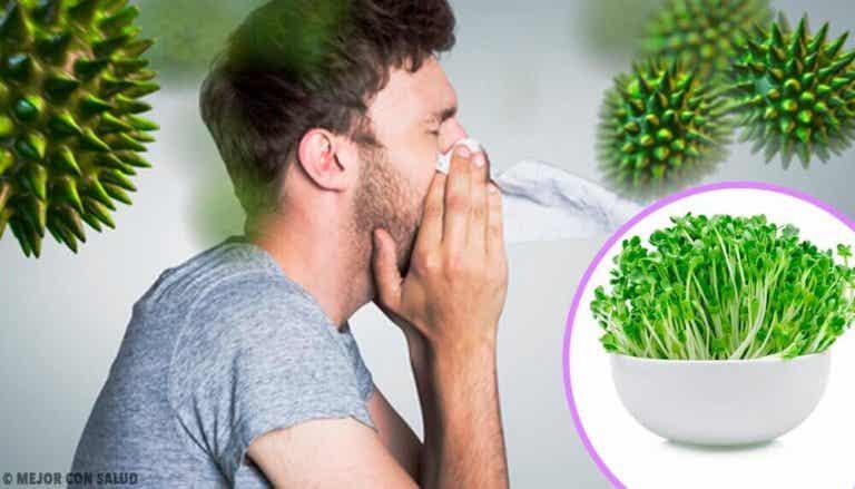 De zes gezondheidsvoordelen van alfalfa eten
