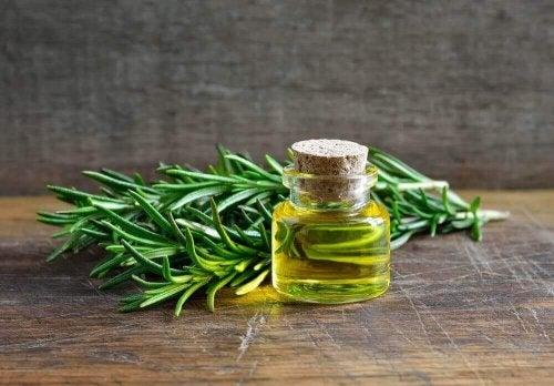 Ontdek de ongelooflijke toepassingen en voordelen van rozemarijn
