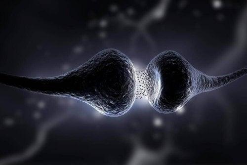 Het serotoninedieet: wat is het en wat zijn de voordelen?