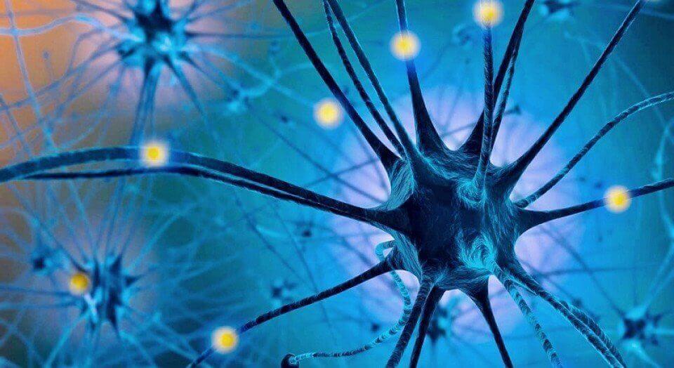 Het serotoninedieet: molecule