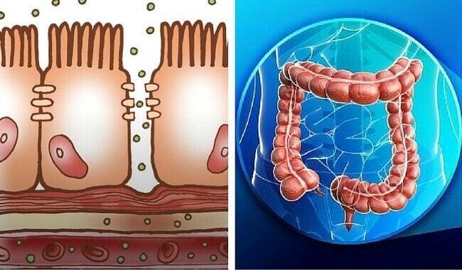 Fysiologie van de dikke darm zoals de uitscheiding